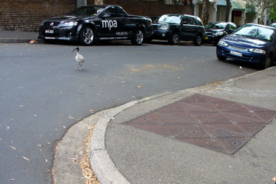 Inner city ibis, Surry Hills, Sydney (All photos by meganix)